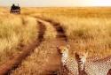 on-safari-with-safari-trails